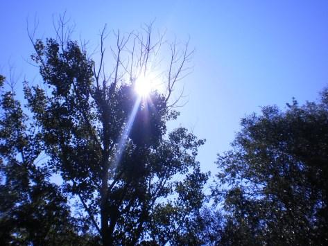 Svetlost iznad  krošnje, Snimljeno u Zviždu, 2013, leto